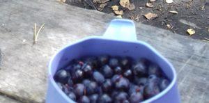 fruits finlandais