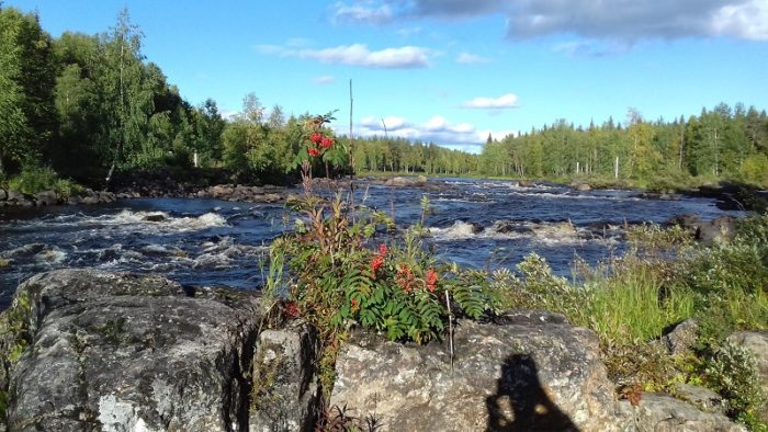 Vikaköngäs en été (photo prise en 2017)