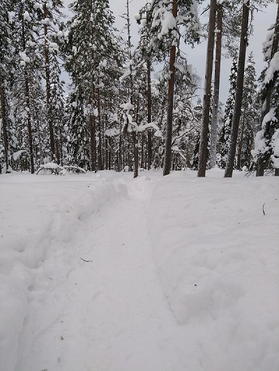 Photo taken in 2018 while hiking around Rovaniemi