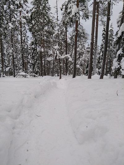 Photo des chemins de randonnées à Rovaniemi. Secteur autour de Vikaköngäs prise en 2018