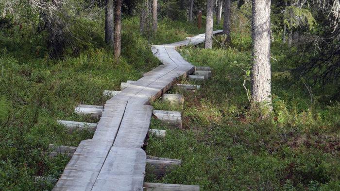 Les randonnées autour de Rovaniemi en été