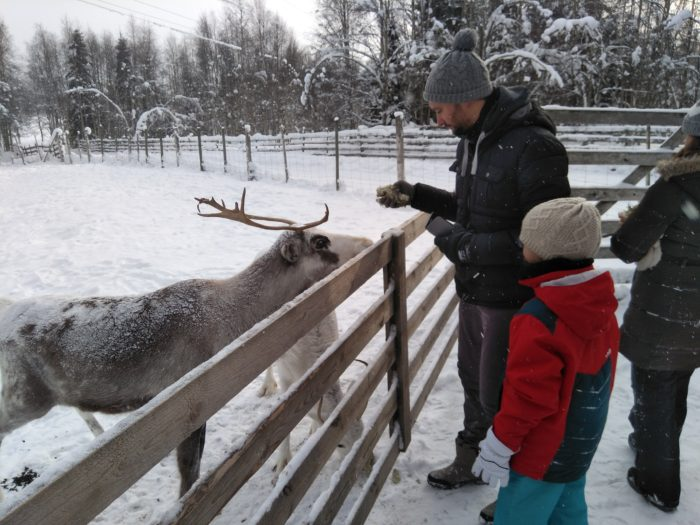 reindeer in farm