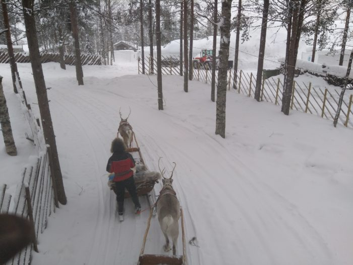 Reindeers around Santa claus village